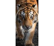 Froté osuška Tygr Bengálský